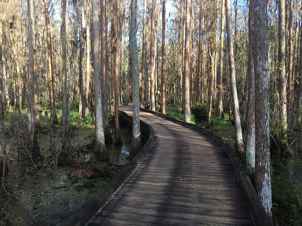 cart-path